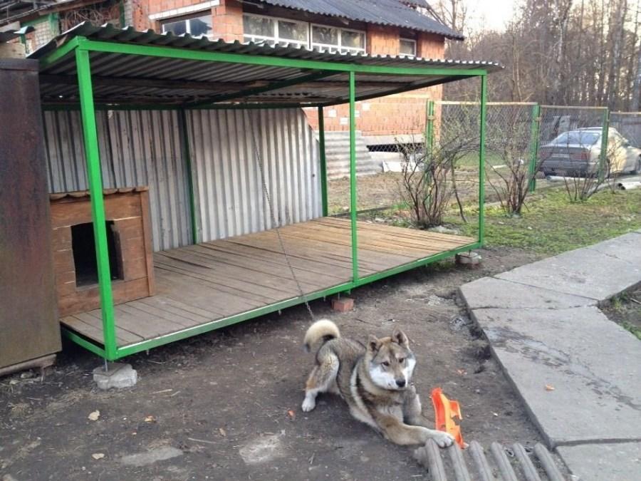 كلب القفص