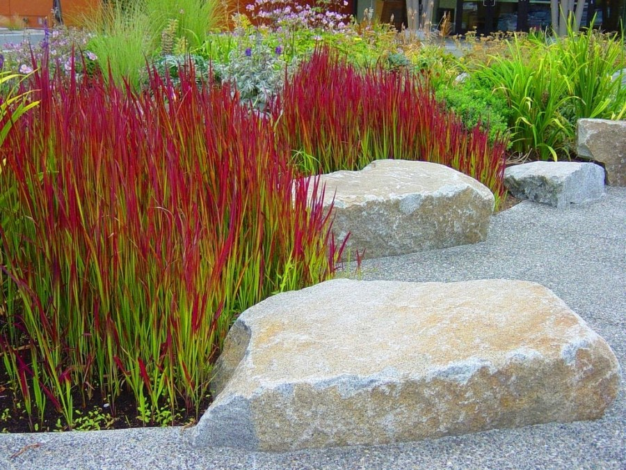 Herbe décorative - application en aménagement paysager