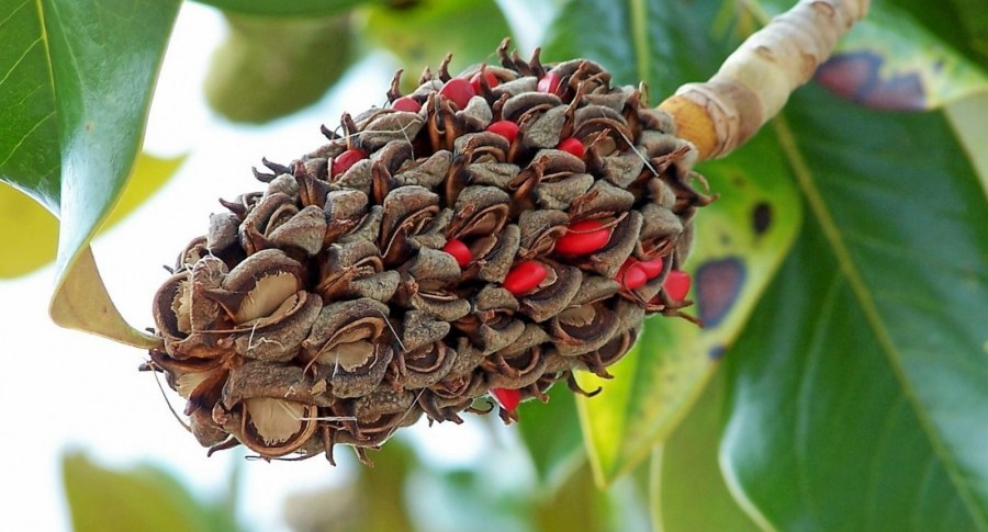 TSvetyi magnoliya 2 3