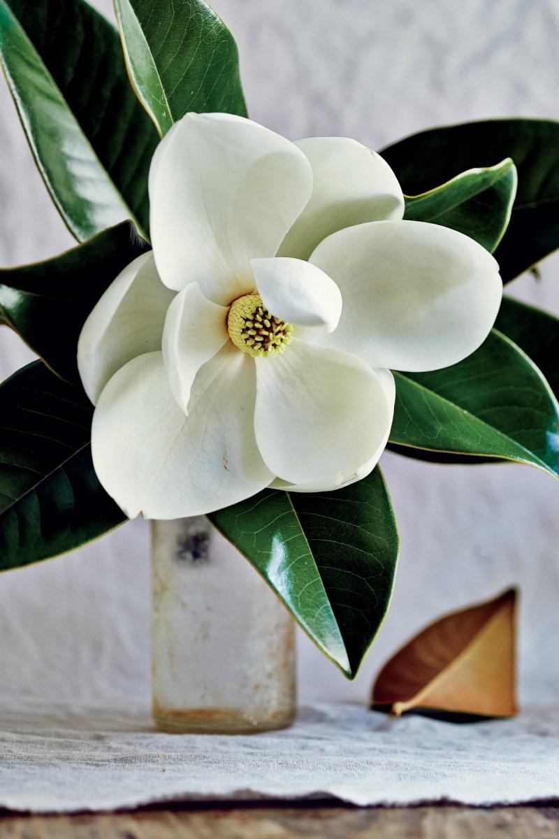 TSvetyi magnoliya 41