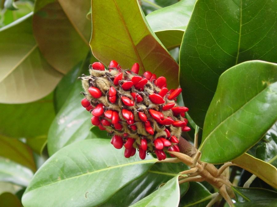 TSvetyi magnoliya 7 1
