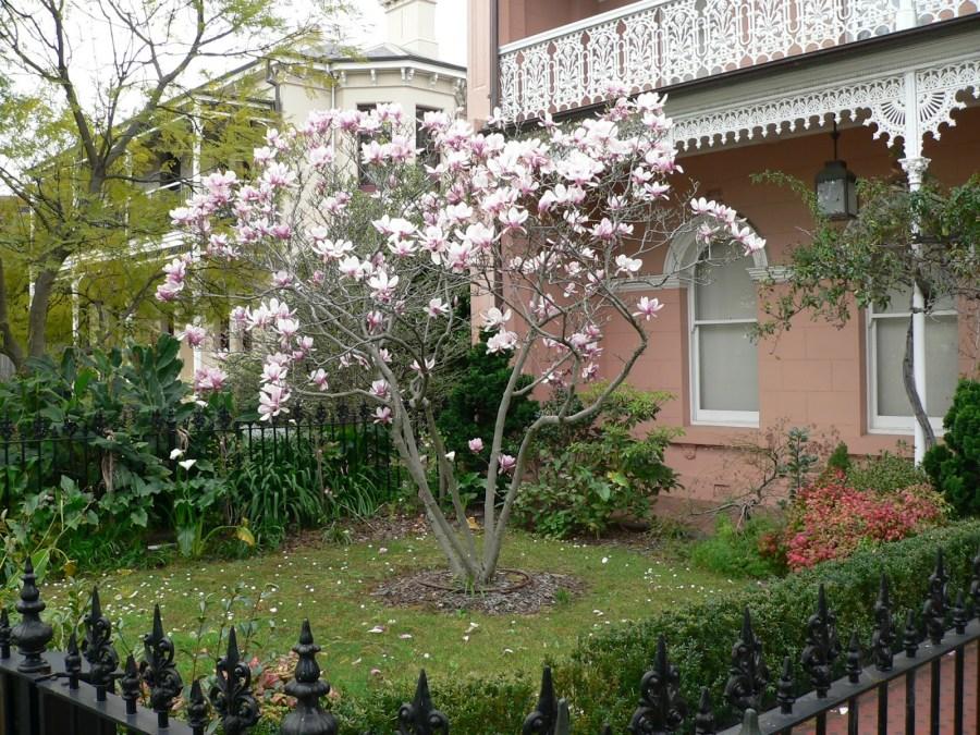 TSvetyi magnoliya 76